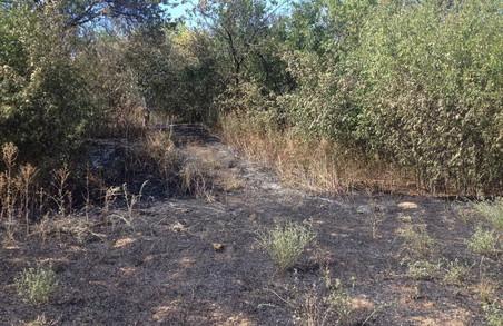 Пожежі в екосистемах Харківщини дедалі збільшуються - ДСНС