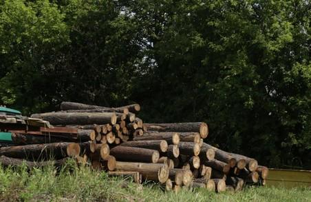 Світлична закликала правоохоронців активізувати боротьбу з незаконною вирубкою лісу