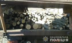 На Харківщині продовжуються незаконна порубка лісу (ФОТО)