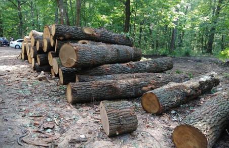 Просто так 112 мільйонів не пиляють – Чагаровський розповів про розкрадання лісу у Жовтневому лісхозі