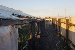 На Харківщині випалювання сухостою мало не знищило теплицю