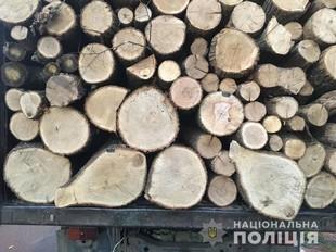 Справа «чорних лісорубів». На Харківщині керівники держлісгоспу розкрали деревини на більше ніж 6 мільйонів гривень