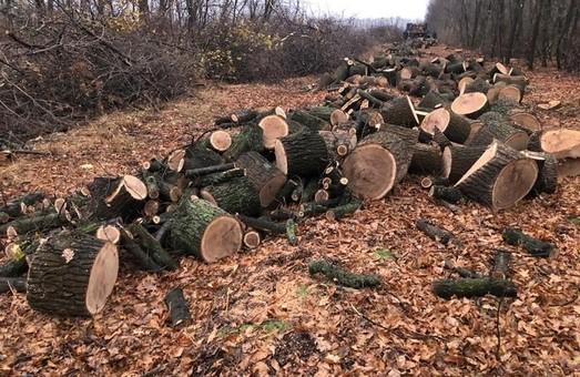 Харківська СБУ затримала п'ятьох «чорних лісорубів» (ФОТО)