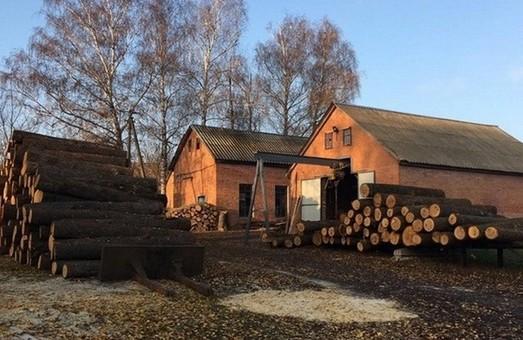 На Харківщині «чорні лісоруби» знищили ліс майже на сто мільйонів гривень – СБУ