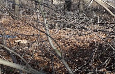 Харківські активісти спіймали на гарячому «чорних лісорубів» (ВІДЕО)
