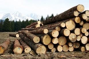 Суд залишив лісника-хабарника Сису на посаді