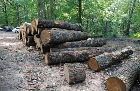 Оточення лісника Сиси створила нову фірму, яка бере деревину у лісгоспі Сиси