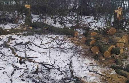 Знищення лісу: на Харківщині знову спіймали браконьєрів (ФОТО)