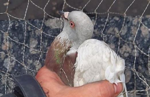 Врятовано птаха, який п`ять днів не міг вилетіти із харківського метро (ФОТО)