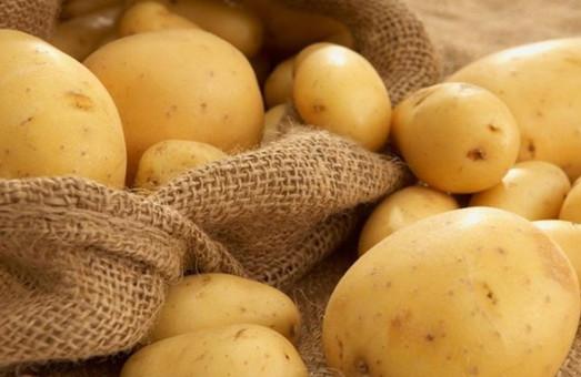 ХАЦ назвав ОТГ, яка закуповує картоплю за найвищою ціною на Харківщині