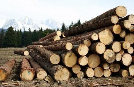 Повідомлено про підозру родичці директора ДП «Гутянське лісове господарство»