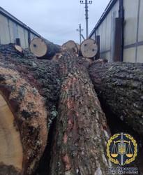 Прокуратура домоглася арешту незаконно зрубаної деревини та вантажного автомобілю