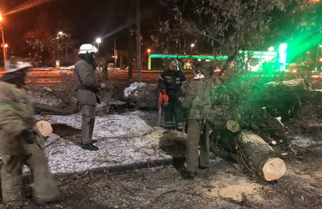 У Харкові рятувальники звільнили жінку, яку затиснуло поваленим деревом в автомобілі (ФОТО)