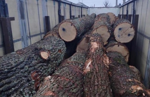 Незаконні порубки лісу на Харківщині заподіяли збитки на суму понад 29 мільйонів гривень
