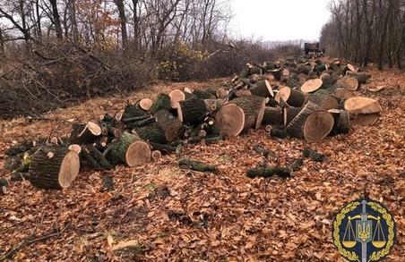 Прокуратура успішно вживає заходів для протидії незаконній вирубці лісу на Харківщині
