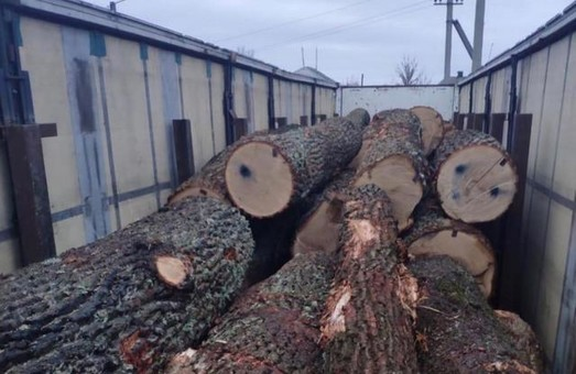 Двом лісникам з ДП «Жовтневе лісове господарство» повідомлено про підозру