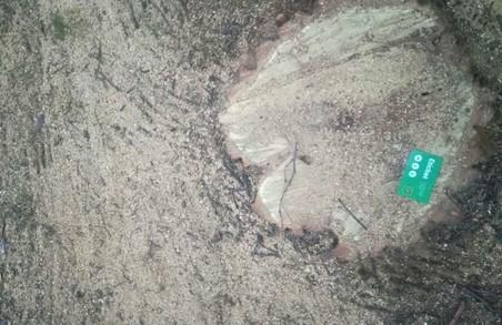 На Майдані Героїв Небесної Сотні вирубали дерева (ФОТО)