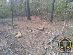 На Харківщині «чорного лісоруба» засудили до трьох років ув'язнення (ФОТО)