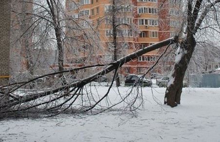 Наслідки негоди: в Харкові вітер повалив дерева, в області знеструмлені населенні пункти