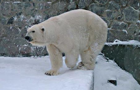 Вольєр для білих ведмедів обійдеться Харкову у 55 мільйонів гривень