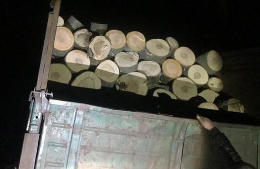 На Харківщині продовжують орудувати «чорні лісоруби» (ФОТО)
