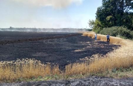 Конкуренти не дрімають: на Харківщині спалили пшеницю майбутнього врожаю