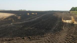 Підпали тривають: у Харківській області продовжують знищувати врожай