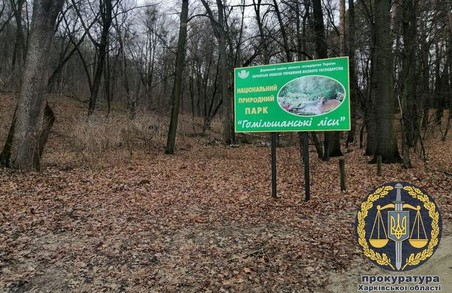 Дерибан «Гомільшанських лісів»: екс-посадовець Держкомзему постане перед судом