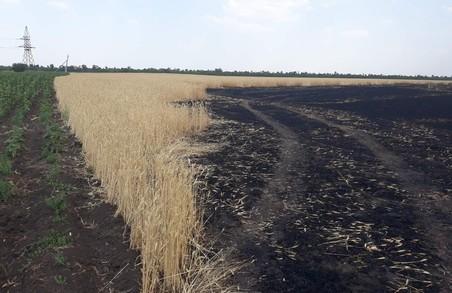 Діти спалили врожай на Харківщині