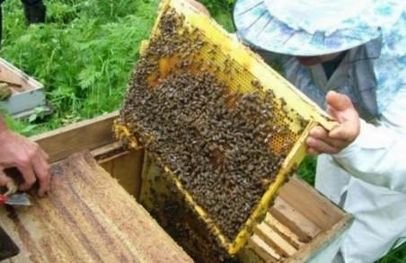 «Мертві бджоли не гудуть»: на Харківщині виникла згубна тенденція