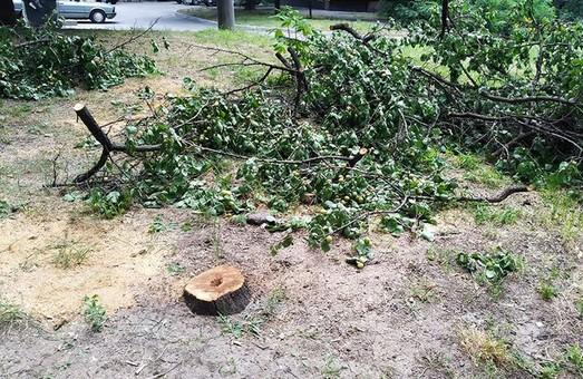 У Харкові триває війна з деревами: комунальники планують вирубку дерев на території трьох шкіл
