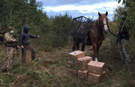 На Харківщина порушник намагався перетнути кордон на коні (ФОТО, ВІДЕО)