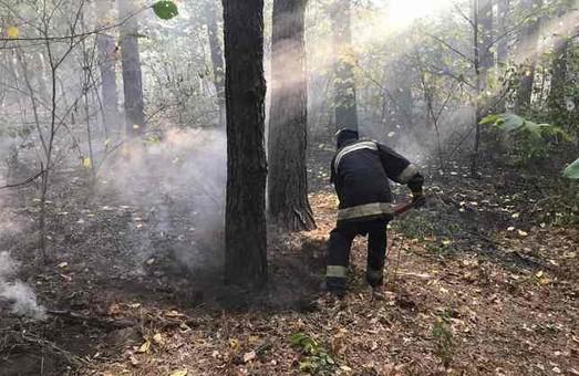 Пожежі в екосистемах на Харківщині завдають збитків лісам і приватним маєткам (ФОТО)