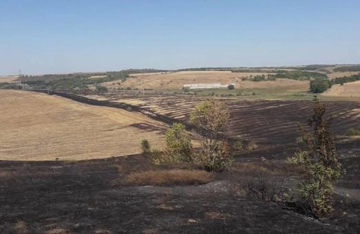 За минулу добу пожежі знищили близько 22,5 га природних екосистем Харківщини