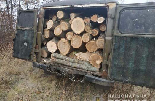На Харківщині «чорні лісоруби» продовжують знищувати ліс (ФОТО)