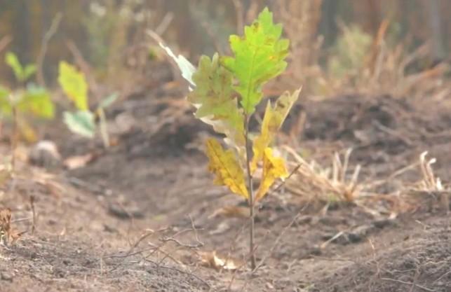 «Справа Сиси»: лісник, який викрив «чорних» лісорубів на Харківщині, знявся у фільмі (ВІДЕО)